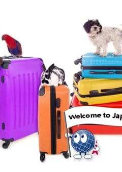 Bringing Pets to Japan and Back: A Quick 4-Step Guide